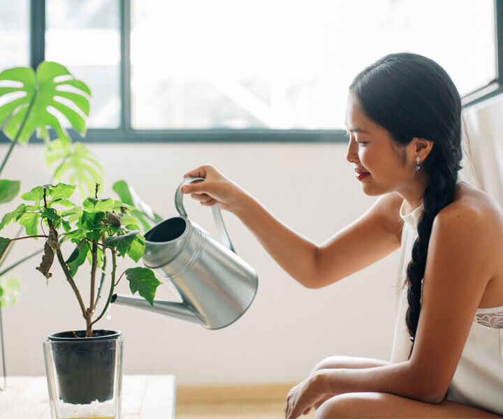 Your Indoor Plant Growing
