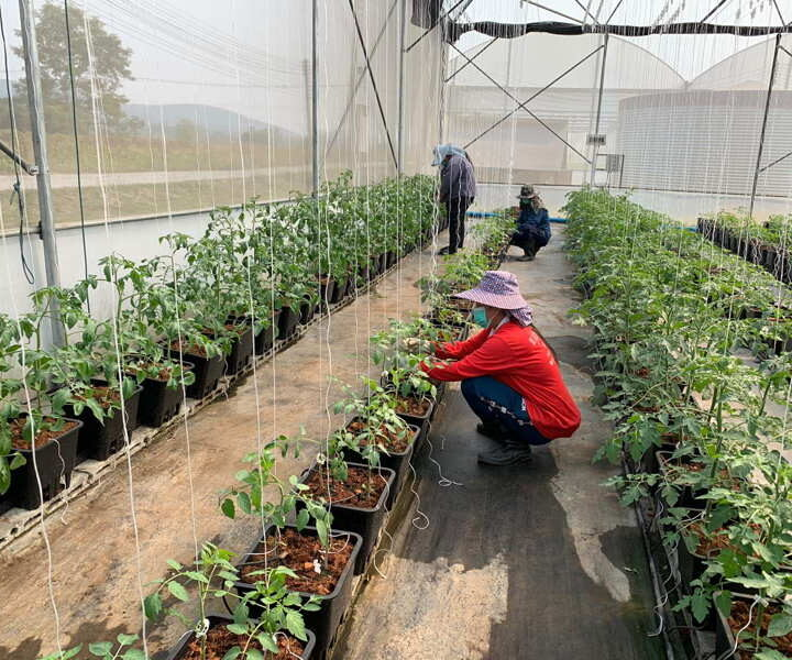 Organic Agriculture – Way to Progress